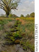 Купить «willow, osier (Salix spec.), course of a stream and willow, Germany, Bavaria, Oberpfalz», фото № 13739471, снято 8 июля 2020 г. (c) age Fotostock / Фотобанк Лори
