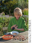 Купить «Common hazel (Corylus avellana), boy sitting at the garden table cracking self-collected hazelnuts for making his own chocolate spread, Germany», фото № 13779611, снято 19 октября 2018 г. (c) age Fotostock / Фотобанк Лори