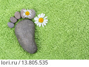 Купить «footprint made of stones with chamomile flowers», фото № 13805535, снято 20 октября 2018 г. (c) PantherMedia / Фотобанк Лори
