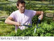 Купить «Hedge trimmers, Hand tool, Garden, Gardener pruning bush.», фото № 13806207, снято 21 октября 2018 г. (c) age Fotostock / Фотобанк Лори