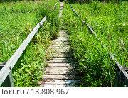 Купить «Overgrown long wooden boardwalk», фото № 13808967, снято 18 ноября 2019 г. (c) PantherMedia / Фотобанк Лори