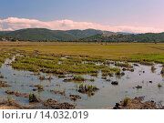 Rice field, Old lagoon of La Janda, Benalup de Sidonia, Cadiz-province, Spain. Стоковое фото, фотограф José Lucas / age Fotostock / Фотобанк Лори