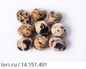 Перепелиные яйца. Стоковое фото, фотограф Юлия Горбачева / Фотобанк Лори