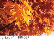 Купить «Золотая осень», эксклюзивное фото № 14180087, снято 5 ноября 2015 г. (c) Ирина Водяник / Фотобанк Лори