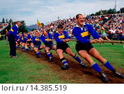 Купить «Tug O'War (Tug of War) test of strength at the Braemar Games highland gathering in Scotland.», фото № 14385519, снято 16 января 2019 г. (c) age Fotostock / Фотобанк Лори