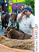 Horse fair in market square in Kilrush, Co. Clare, Ireland. Traditional for locals and travellers to trade horses and ponies. Стоковое фото, фотограф Tim Graham / age Fotostock / Фотобанк Лори