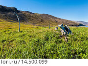 Whale Bone Alley, Ittygran Island, Chukotka, Russia, Eurasia. Стоковое фото, фотограф G&M Therin-Weise / age Fotostock / Фотобанк Лори