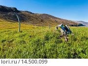 Купить «Whale Bone Alley, Ittygran Island, Chukotka, Russia, Eurasia», фото № 14500099, снято 11 октября 2019 г. (c) age Fotostock / Фотобанк Лори