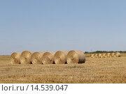Купить «Круглые мотки сена в поле», эксклюзивное фото № 14539047, снято 11 августа 2015 г. (c) Дмитрий Неумоин / Фотобанк Лори