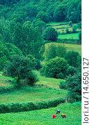 Купить «Farming in Galicia, Spain.», фото № 14650127, снято 24 января 2019 г. (c) age Fotostock / Фотобанк Лори