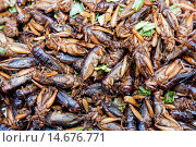Купить «Asia, Thailand, Chiang Mai, Warorot Market, Market, Markets, Shops, Shopping, Thai Food, Food, Asian Food, Asian, Thai, Weird Food, Strange Food, Bugs, Insects, Locusts», фото № 14676771, снято 21 марта 2019 г. (c) age Fotostock / Фотобанк Лори