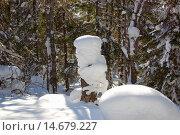 Купить «Боярская шапка из снега  на пеньке», фото № 14679227, снято 10 марта 2013 г. (c) Юрий Карачев / Фотобанк Лори
