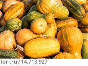 Купить «Урожай тыквы», фото № 14713927, снято 4 октября 2015 г. (c) Сергей Лаврентьев / Фотобанк Лори