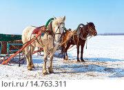 Купить «Лошади, запряженные в сани, на берегу заснеженной реки», фото № 14763311, снято 18 июня 2019 г. (c) FotograFF / Фотобанк Лори