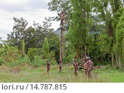 Купить «, group of Dani warriors in the shrubland, Indonesia, Western New Guinea, Baliem Valley», фото № 14787815, снято 19 июня 2011 г. (c) age Fotostock / Фотобанк Лори