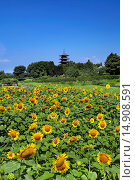 Купить «Bitchu Kokubu Temple, Soja, Okayama, Japan», фото № 14908591, снято 26 марта 2019 г. (c) age Fotostock / Фотобанк Лори