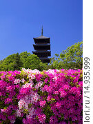 Купить «Bitchu Kokubu temple, Five-Storied Pagoda, azalea, buddhist temple, Soja city, Okayama Prefecture, Sanyo, Japan», фото № 14935999, снято 26 марта 2019 г. (c) age Fotostock / Фотобанк Лори