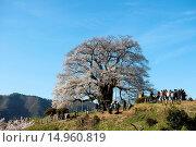 Купить «Daigo cherry blossoms, Maniwa, Okayama, Sanyo, Japan», фото № 14960819, снято 23 октября 2018 г. (c) age Fotostock / Фотобанк Лори