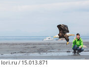 Купить «Man photographs a Bald Eagle taking off from Bishop's Beach, Anchor Point, Southcentral Alaska, USA», фото № 15013871, снято 8 декабря 2019 г. (c) age Fotostock / Фотобанк Лори