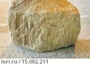 Купить «Bergaueria in sandstone», фото № 15082211, снято 1 сентября 2014 г. (c) age Fotostock / Фотобанк Лори