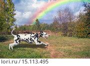 Собака далматин и радуга. Стоковое фото, фотограф Sergey Fatin / Фотобанк Лори