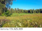 Купить «Летний пейзаж в Московской области», фото № 15325399, снято 4 июля 2015 г. (c) Валерий Боярский / Фотобанк Лори
