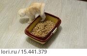 Купить «Котенок изучает древесный наполнитель в кошачьем туалете», видеоролик № 15441379, снято 5 декабря 2015 г. (c) Володина Ольга / Фотобанк Лори