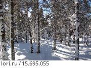 Купить «Зимний лес, ели в снегу, природный парк Таганай, южный урал», фото № 15695055, снято 10 марта 2013 г. (c) Юрий Карачев / Фотобанк Лори
