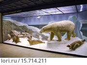 Купить «Экспозиция с животными. Музей Дарвина», эксклюзивное фото № 15714211, снято 26 июля 2014 г. (c) Галина Шорикова / Фотобанк Лори