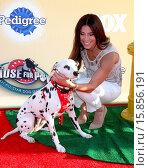 Купить «PAWS for Cause FOX TV Special Taping Featuring: Roselyn Sanchez Where: Santa Monica, California, United States When: 22 Nov 2014 Credit: Nicky Nelson/WENN.com», фото № 15856191, снято 22 ноября 2014 г. (c) age Fotostock / Фотобанк Лори