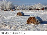 Купить «frozen snow covered hay bales in a field Forget Saskatchewan Canada.», фото № 15877419, снято 15 декабря 2012 г. (c) age Fotostock / Фотобанк Лори
