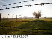Купить «Barbed Wires And Tree, Auschwitz-Birkenau Concentration Camp, Oswiecim, Malopolska, Poland», фото № 15972367, снято 23 апреля 2019 г. (c) age Fotostock / Фотобанк Лори