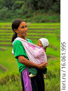 Купить «mother carrying her baby in a baby sling, Ifugao People, Philippines, Luzon, Patpat», фото № 16061995, снято 15 декабря 2014 г. (c) age Fotostock / Фотобанк Лори
