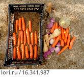 Купить «Vegetables maintain in sands for conservation», фото № 16341987, снято 5 июля 2020 г. (c) age Fotostock / Фотобанк Лори