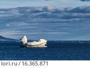 Айсберги плавают около восточного побережья Северного острова Новой Земли. Стоковое фото, фотограф Сергей Гусев / Фотобанк Лори