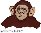 Шимпанзе. Стоковая иллюстрация, иллюстратор Фёдор Мешков / Фотобанк Лори