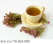Купить «Thyme herbal infusion (Thymus vulgaris)», фото № 16423099, снято 28 сентября 2018 г. (c) easy Fotostock / Фотобанк Лори