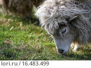 Petzi. Стоковое фото, фотограф Antje Lindert-rottke / easy Fotostock / Фотобанк Лори