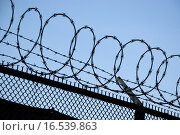 Купить «barbed wire - danger - prison», фото № 16539863, снято 18 августа 2018 г. (c) PantherMedia / Фотобанк Лори