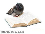 Голубь у открытой книги. Стоковое фото, фотограф Павел С. / Фотобанк Лори