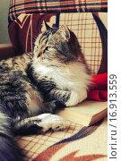 Купить «Полосатый пушистый кот отдыхает на книгах», фото № 16913559, снято 18 июня 2019 г. (c) Зезелина Марина / Фотобанк Лори
