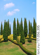 Cypress trees and flower beds in botanical garden. Стоковое фото, фотограф Zoonar/O Lipatova / easy Fotostock / Фотобанк Лори