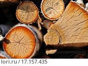 Купить «Поленница из березовых дров», фото № 17157435, снято 28 мая 2012 г. (c) Евгений Суворов / Фотобанк Лори