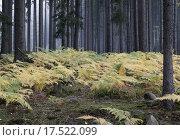 Купить «Fog in the forest with ferns», фото № 17522099, снято 20 июня 2019 г. (c) PantherMedia / Фотобанк Лори