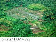 Купить «ricefield», фото № 17614895, снято 20 февраля 2020 г. (c) easy Fotostock / Фотобанк Лори