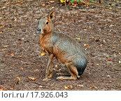 Купить «hare», фото № 17926043, снято 19 октября 2018 г. (c) easy Fotostock / Фотобанк Лори