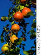 Birne 01. Стоковое фото, фотограф Zoonar/L Matrisch / easy Fotostock / Фотобанк Лори