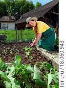 Купить «Grandmother planting vegetables», фото № 18060943, снято 16 июня 2019 г. (c) easy Fotostock / Фотобанк Лори