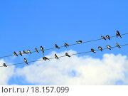 Купить «Ласточки сидят на электрических проводах на фоне синего неба и белых облаков», фото № 18157099, снято 26 августа 2013 г. (c) Григорий Писоцкий / Фотобанк Лори