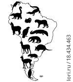 Tiere Südamerika. Стоковое фото, фотограф Liane Nothaft / easy Fotostock / Фотобанк Лори